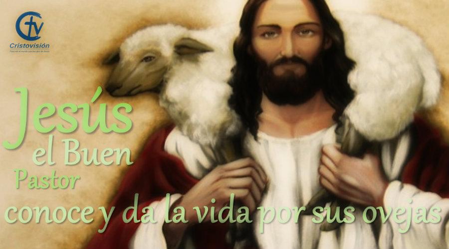 Jesús el Buen Pastor: conoce y da la vida por sus ovejas